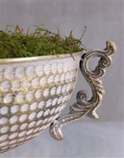 Amaryllis in Gold Chalice Bowl