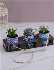 Set Of Three Succulents In Delft Tin