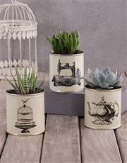 Set Of Three Succulents In Vintage Tin