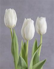 Elegant White Tulip Plant