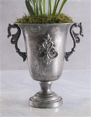 Purple Curcuma in Silver Chalice