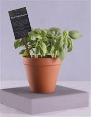 Herb Box With Secret Recipe