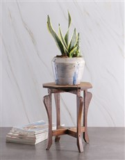 Sanseveria in Glazed Ceramic Pot