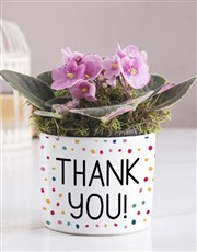 Thank You African Violet