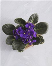 Personalised Blooming Lovely African Violet