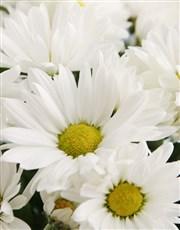 Wondrous Chrysanthemum Basket