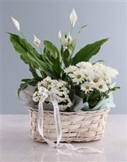 Spathiphyllum Variety Basket
