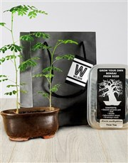 Grow Your Own Bonsai Vibrant Sensations