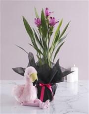 Curcuma Plant in Black Wrapping