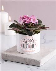Happy Birthday African Violet Blooms