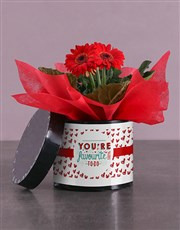 Red Favourite Gerbera Hatbox