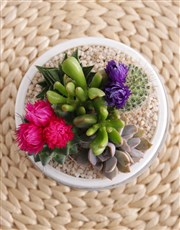 Succulent in Doily Pattern Pot
