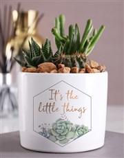 The Little Things Cacti Succulent Pot