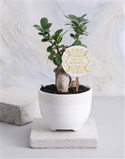 Personalised Friendly Ficus Bonsai