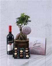Personalised Ficus Bonsai Gift
