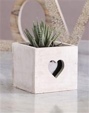 Succulent In Heart Cut Out Crate