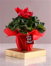 You Got This Red Cyclamen