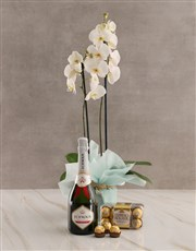 Bubbly Birthday Orchid Hamper