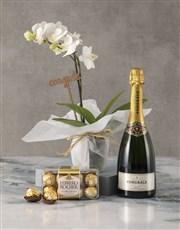 Midi White Orchid Congrats Hamper