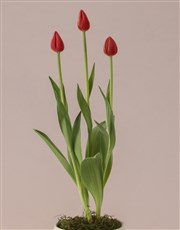 Tulips Of Positive Vibes