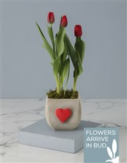 Hearts For Red Tulips