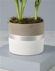 Rustic Tulip Pot Plant