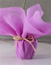 Serene Pink Midi Orchid