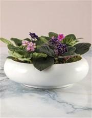 African Violet Mix In Ceramic Pot