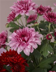 Pink and Red Chrysanthemums Gourmet Gift Set