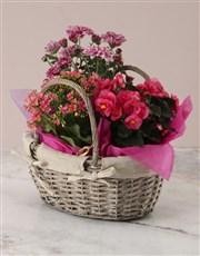 Pink Begonia Basket Arrangement