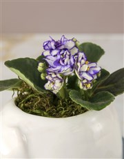 African Violet Zoo