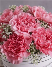 Bubblegum Pink Carnation in a Pink Pot