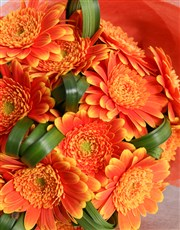 Apricot Bouquet Of Gerbera Daisies