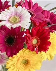 Mixed Gerbera Daisies in a Clear Vase