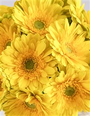 Yellow Gerbera Array
