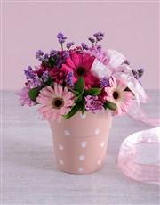 Pink Gerbera Blooms