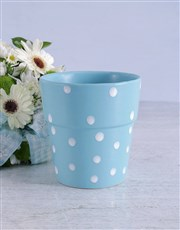 Blue Gerbera Blooms