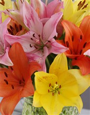 Lily Variety Evergarden