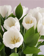 Exquiste White Tulip Delights