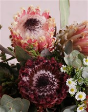 Pink Protea Floral Variety