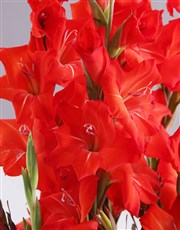 Red and White Gladiolus Arrangement