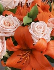 Orange Variety Assortments
