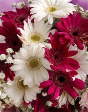 You Go Girl Gerbera Bouquet