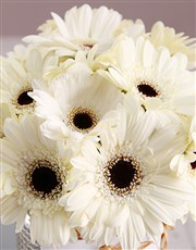Gerbera Cloud With Silver Lining