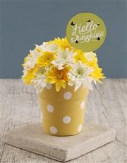Hello Sunshine Sprays In Sunny Pot