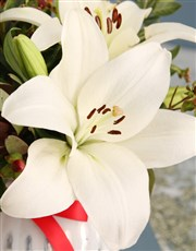 White Asiflorum Lilies in Dainty White Vase