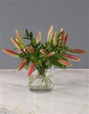 Stargazer Lilies in Cylinder Vase