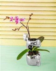 Carrol Boyes Vase - Embrace