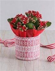 Red Kalanchoe In Embossed Cement Pot