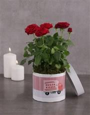 Hugs And Kisses Red Rose Bush